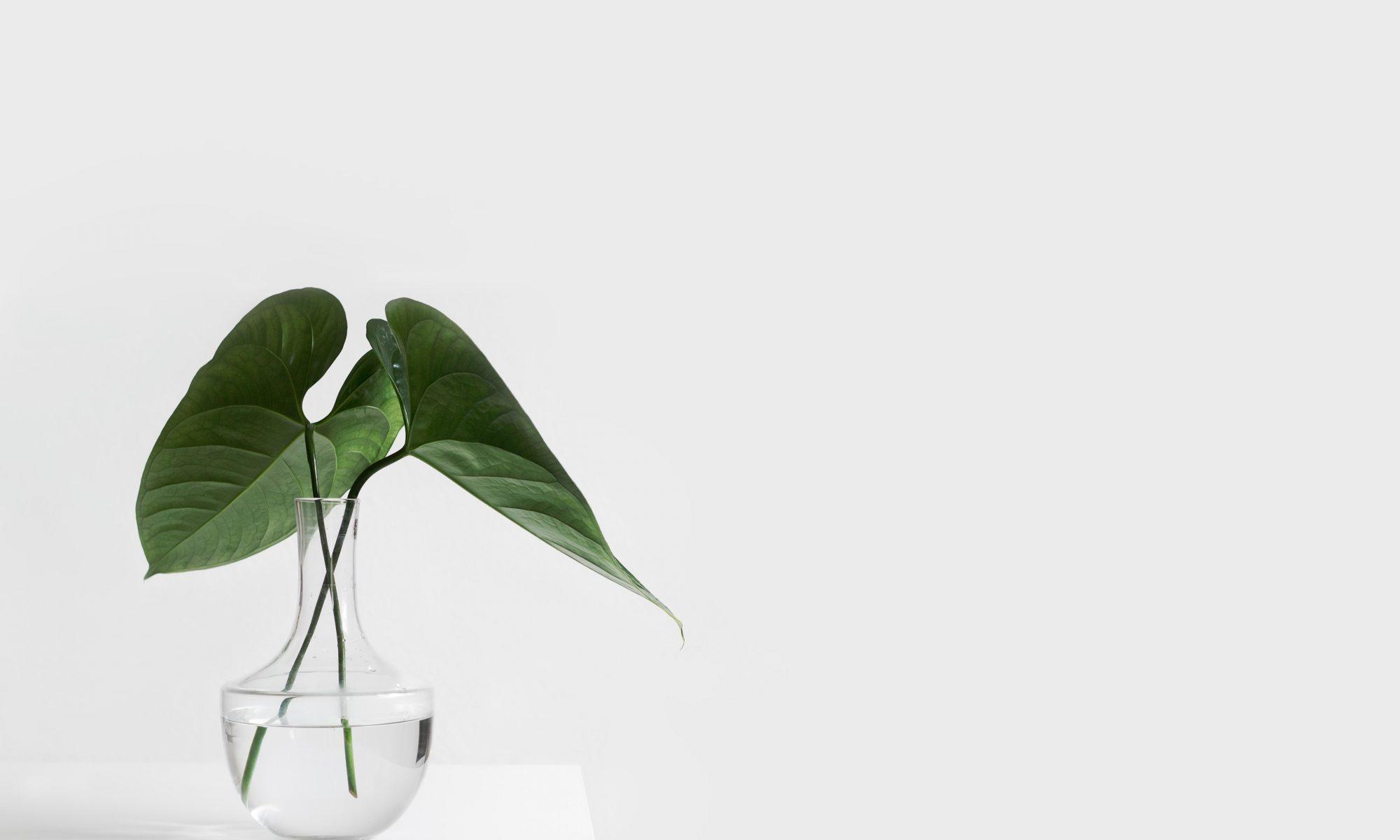 Tumbuhan fotositesis